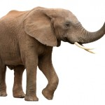 Find Cheap Elephant Insurance Rates