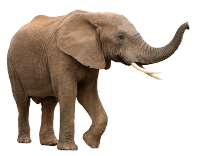 Elephant Auto Insurance Quotes And Reviews